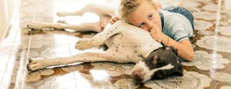 chien enfant et allergie
