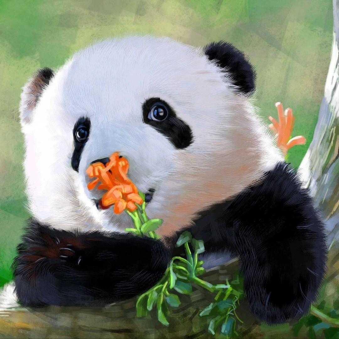 hight resolution of panda home