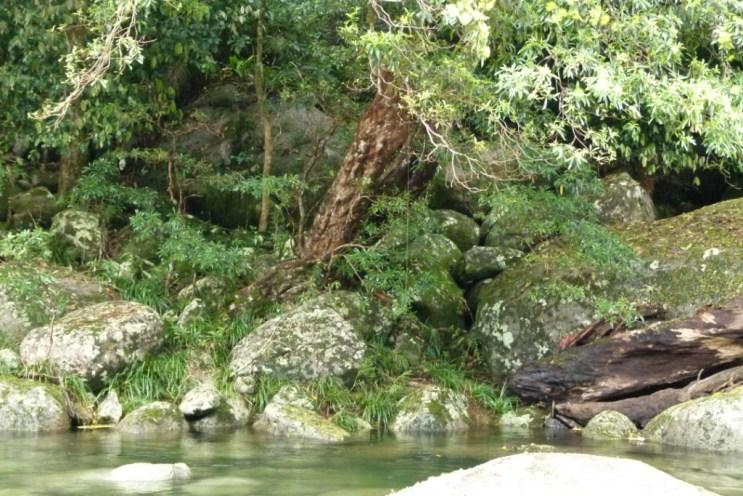 Mossman River (2)