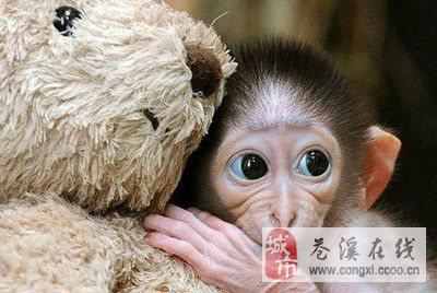 猴的腦部就完全裸露在食客們的面前圖片