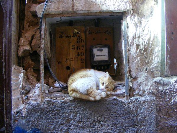 Maroc-marrakech-rues-streets-cat (9)