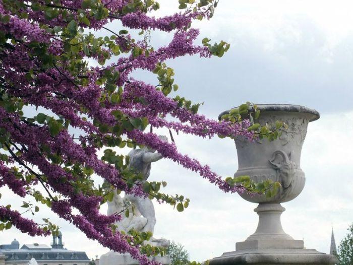 Paris-France-jardin-des-tuileries-louvres (2)