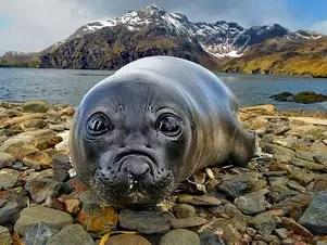 Nos últimos meses, Botelho esteve envolvido na produção de imagens entre a região das Malvinas, da Geórgia do Sul e da Antártida Foto: Daniel Botelho / Divulgação