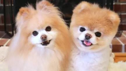 Buddy e Boo eram melhores amigos