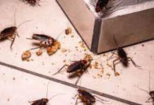 Photo of Mengusir Kecoa Dengan Bahan Alami Bumbu Dapur