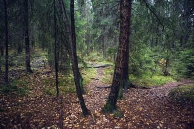 (Foto: Tom Øverlie, NRK)