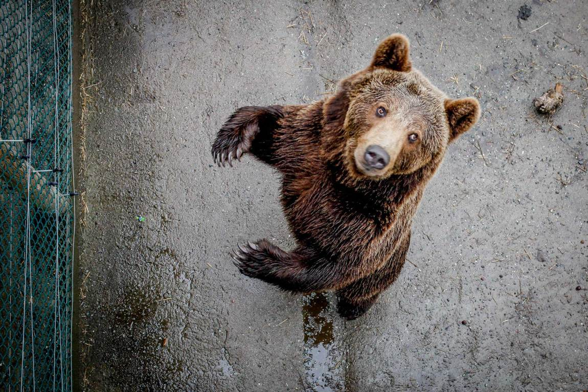 Det bor minst sju bjørner i Flå - og dette er en av dem.