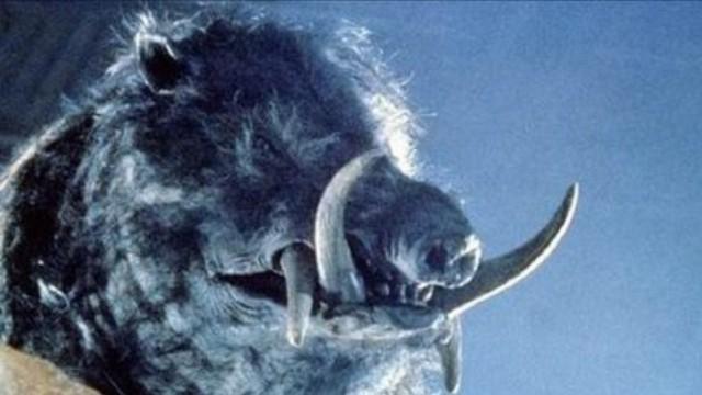 Razorback - 1984. (Foto: UAA Films)