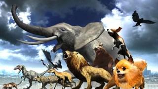 http://p3.no/filmpolitiet/wp-content/uploads/2012/09/tokyo-jungle-e1347873425973.jpg