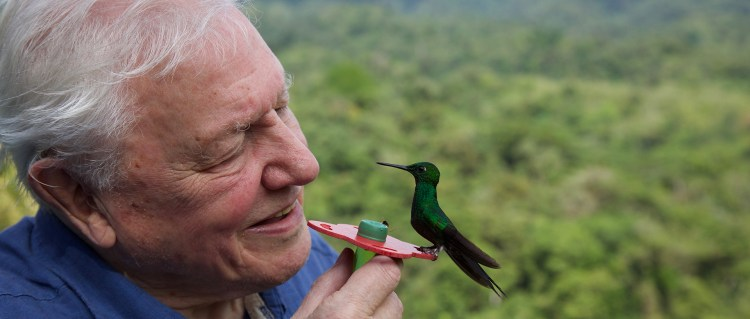Fascinerende fargefest fra David Attenborough