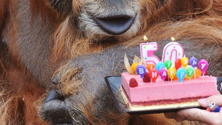 «Happy Birthday» til retten