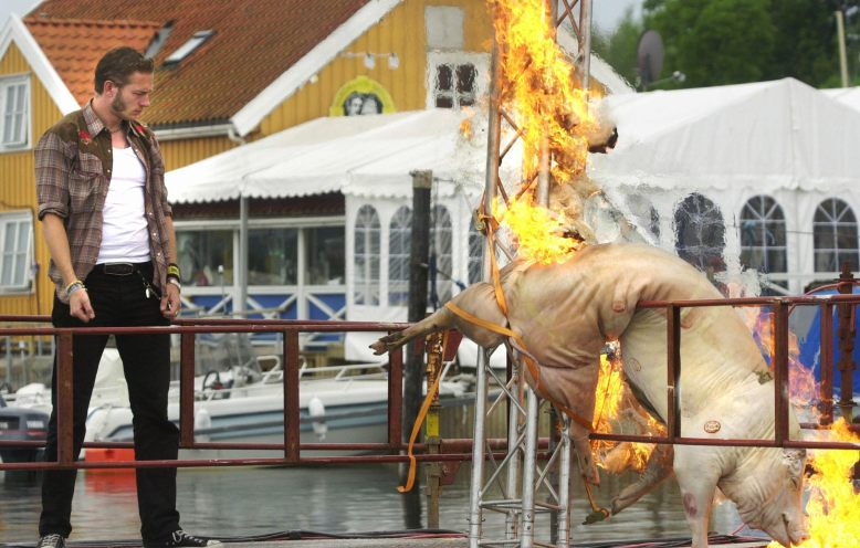 Kristopher Schau tenner på en død gris på scenen under Quartfestivalen. (Foto: Erlend Aas / SCANPIX).