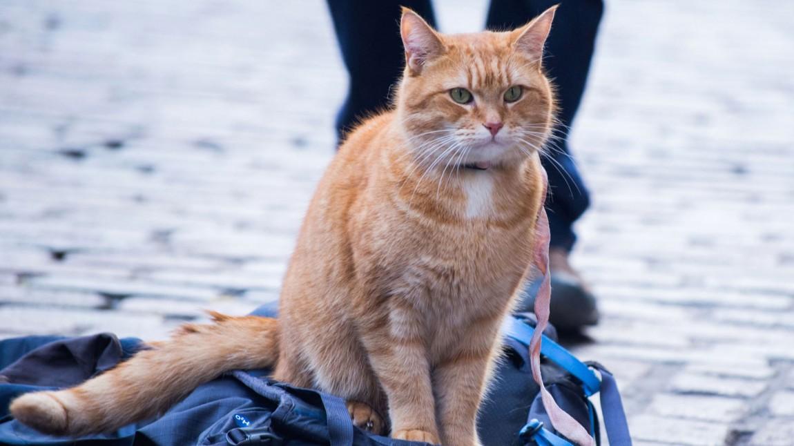 Feelgood for katteelskere
