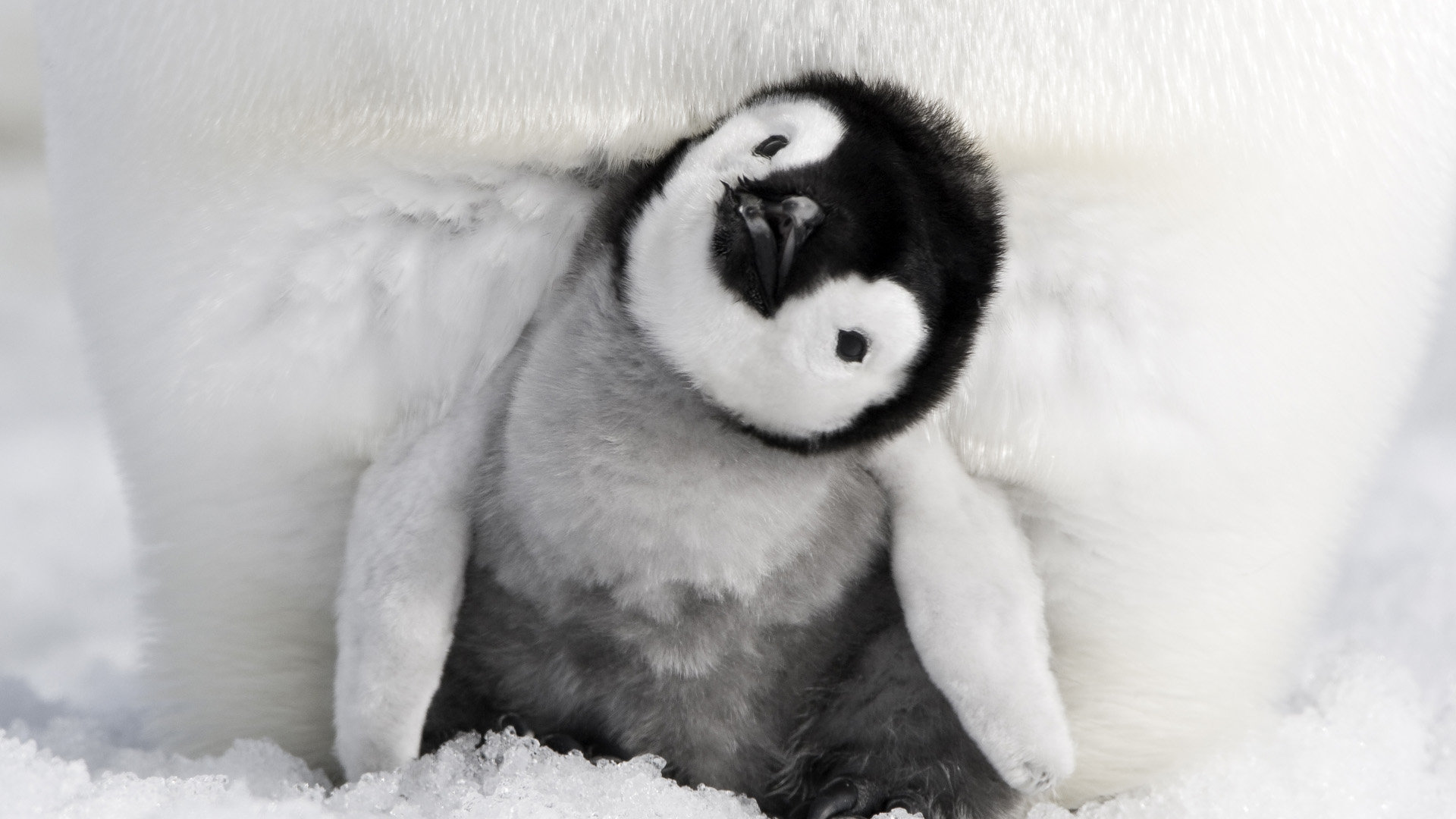Pingvinenes marsj 2