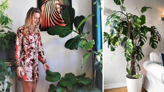 Derfor har grønne planter tatt helt av– og slik tar du vare på dem