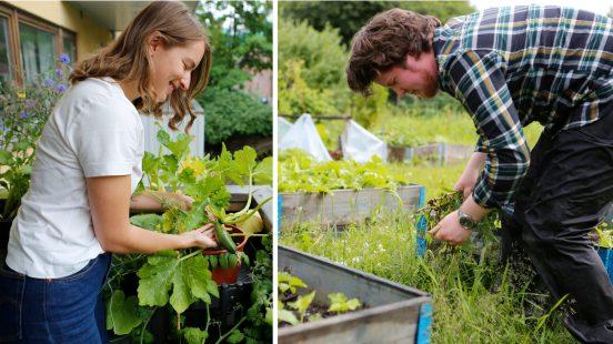 Urban dyrkeboom – slik gror du dine egne grønnsaker