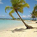 Blogueuse sous les tropiques... blog en pause !