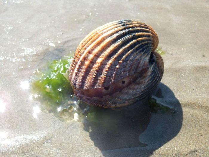 plage-sainte-anne-la-palud-finistere-baie-douarnenez-bretagne-atlantique-vagues-pipit-char-a-voile-coucher-soleil-mouettes (21)