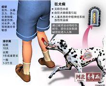 狂犬疫苗_360百科