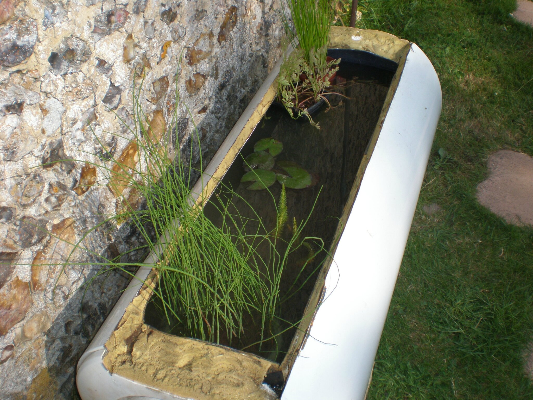un petit bassin hors sol boutures de