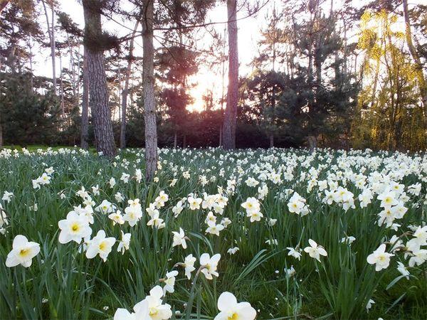 parc-floral-vincennes-printemps-fleurs-jonquilles-magnolias (17)
