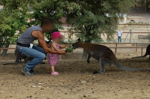 Nourrir les kangourous