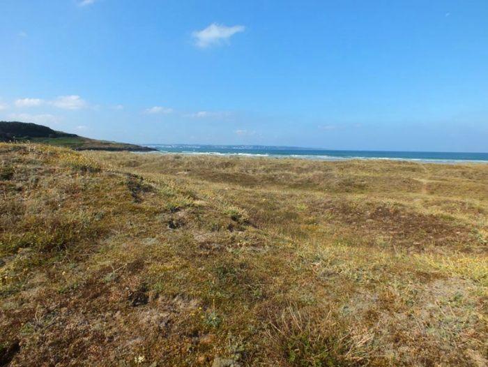 dunes-bretagne-finistere-baie-douarnenez-sainte-anne-la-palud-faune-flore-promenade-sortie-vacances (7)
