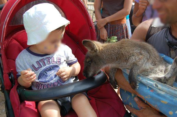 toucher les kangourou