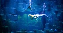 Paris Aquarium Mermaids