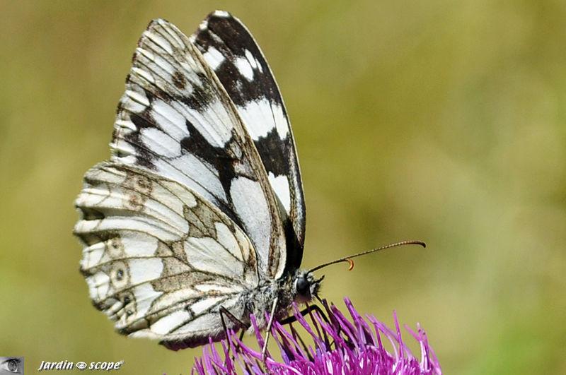 un papillon en noir et blanc le