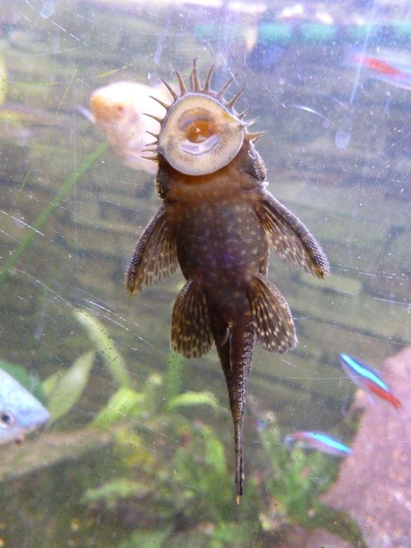 Poisson Laveur De Vitre : poisson, laveur, vitre, Habitants, Fonds, Marins, Points, Lutin