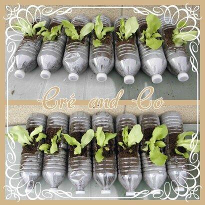 Recup Plantation Salade Cr And Co