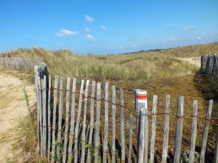 dunes-bretagne-finistere-baie-douarnenez-sainte-anne-la-palud-faune-flore-promenade-sortie-vacances (1)