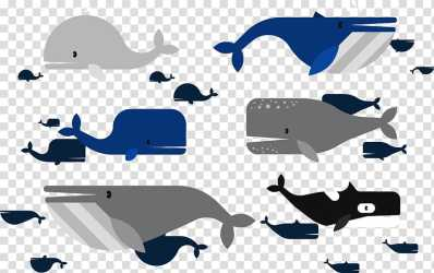 Moby Dick Marine mammal Beluga whale whale transparent background PNG clipart HiClipart