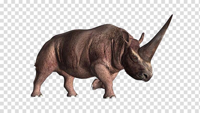 elasmotherium horn unicorn prehistory