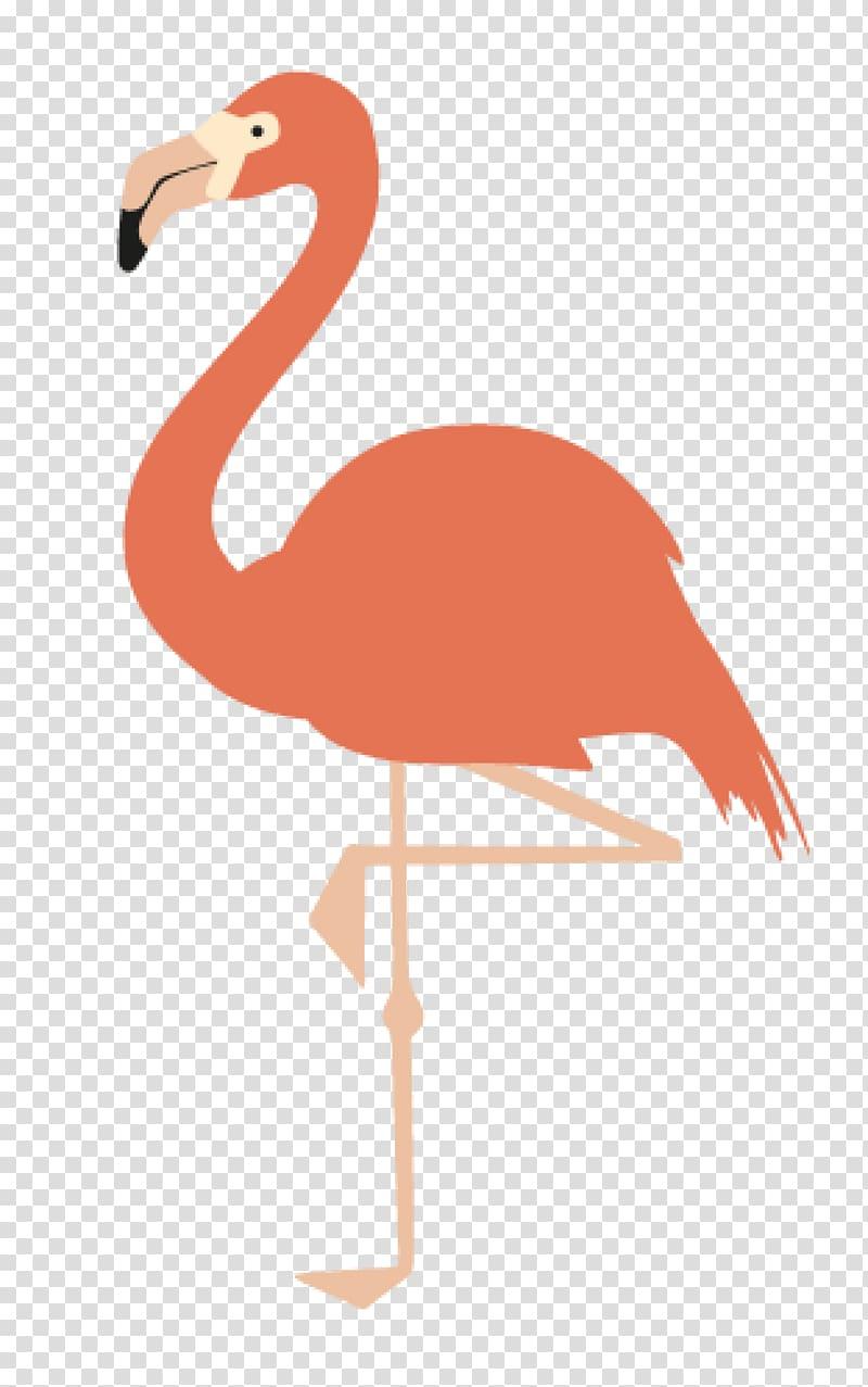 pink flamingo illustration american