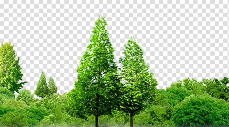 two green trees illustration