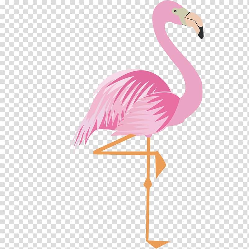 pink flamingo greater flamingo
