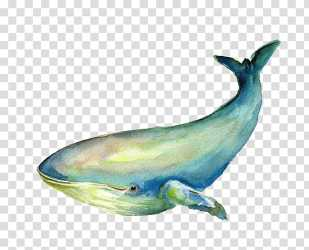 Blue and green whale illustration Baleen whale Blue Whale Illustration whale transparent background PNG clipart HiClipart