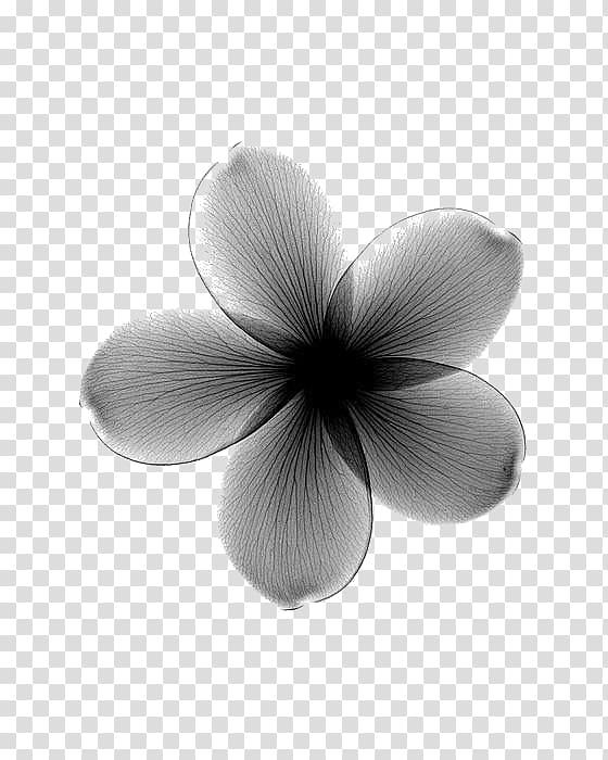 gray 5 petal flower