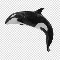 Killer whale Baleen whale Humpback whale Blue whale whale transparent background PNG clipart HiClipart