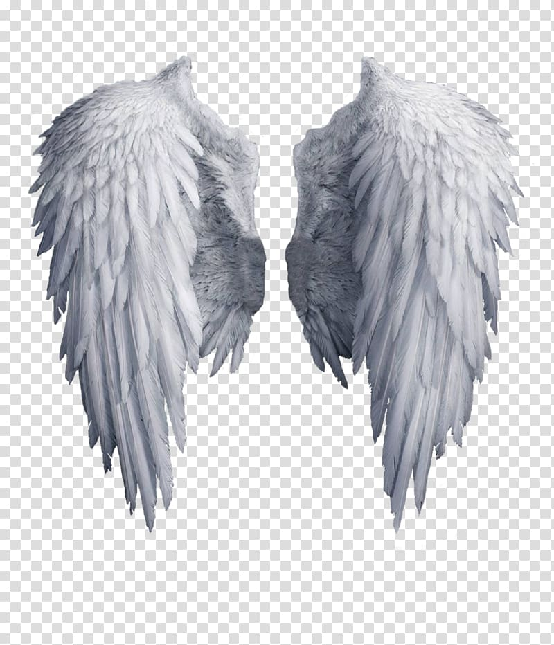 archangel wing angel wing