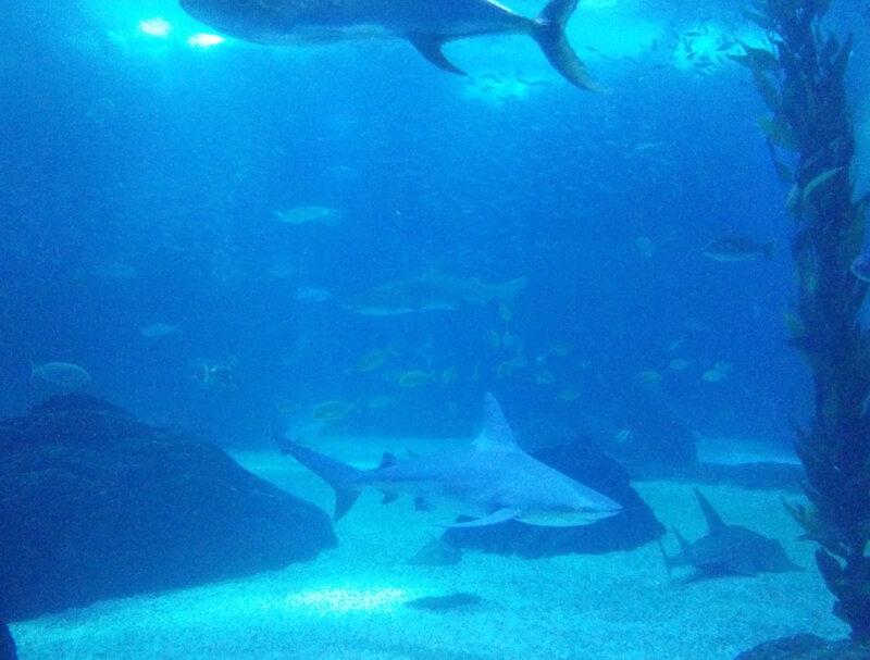Aquarium du Parc des Nations
