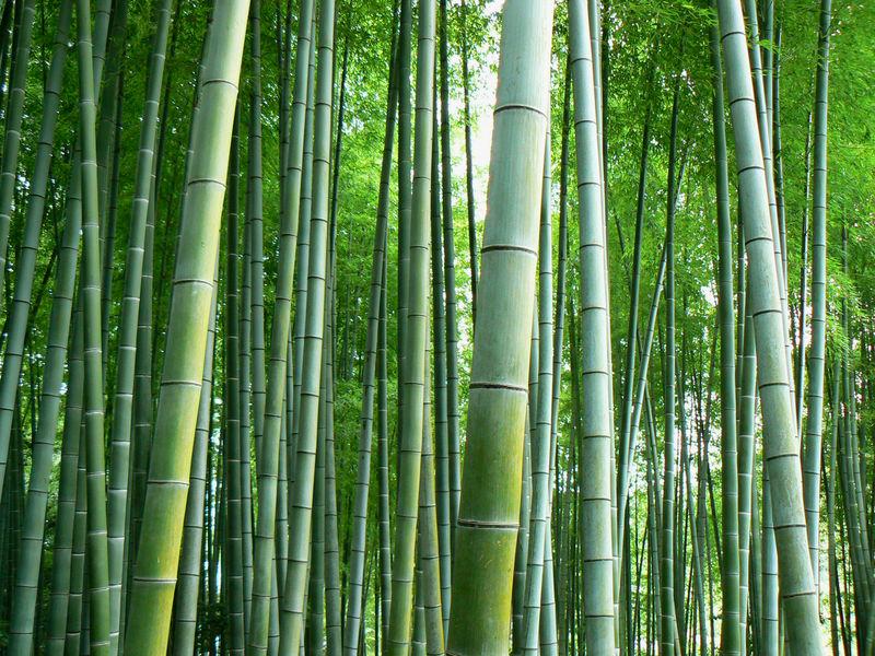 Lesprit Du Bambou Le Japon DAsiemute