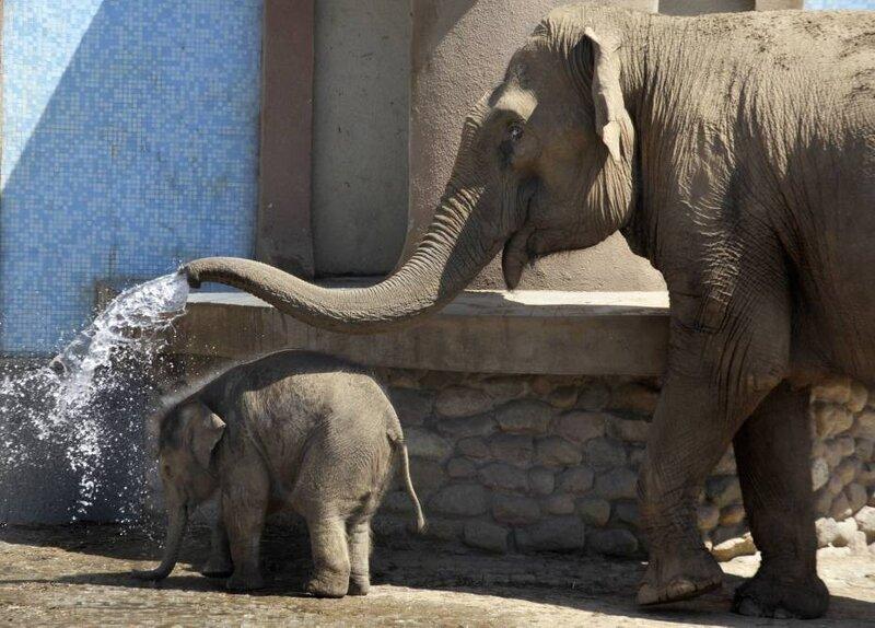 un_bebe_elephant_russe_335