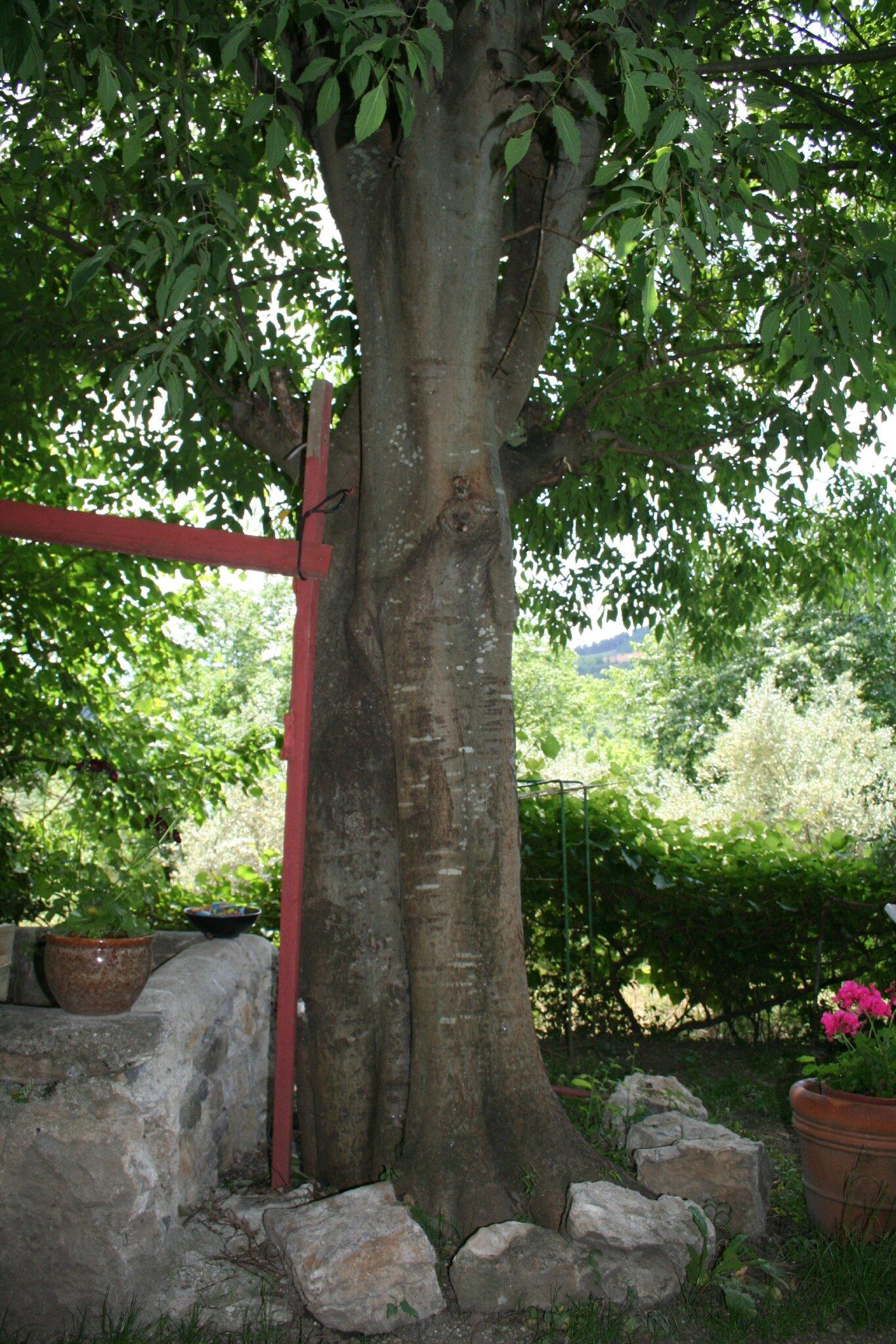 Au Pied De Mon Arbre : arbre, Arbre