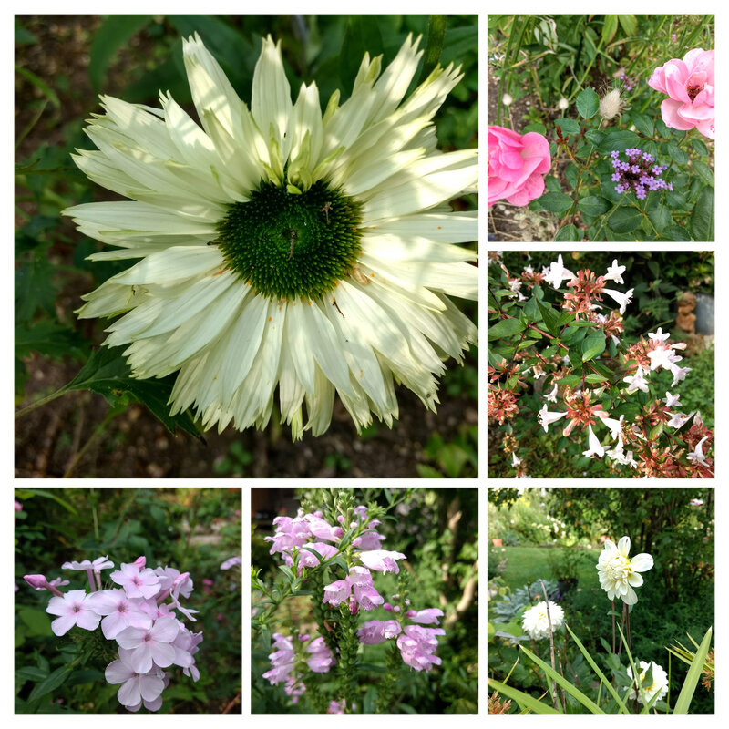 IMG_20190828_100516776-COLLAGE