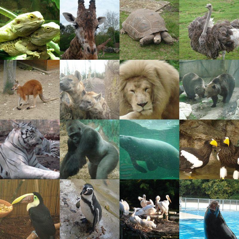 zoo parc de Beauval  Radis et Compagnie