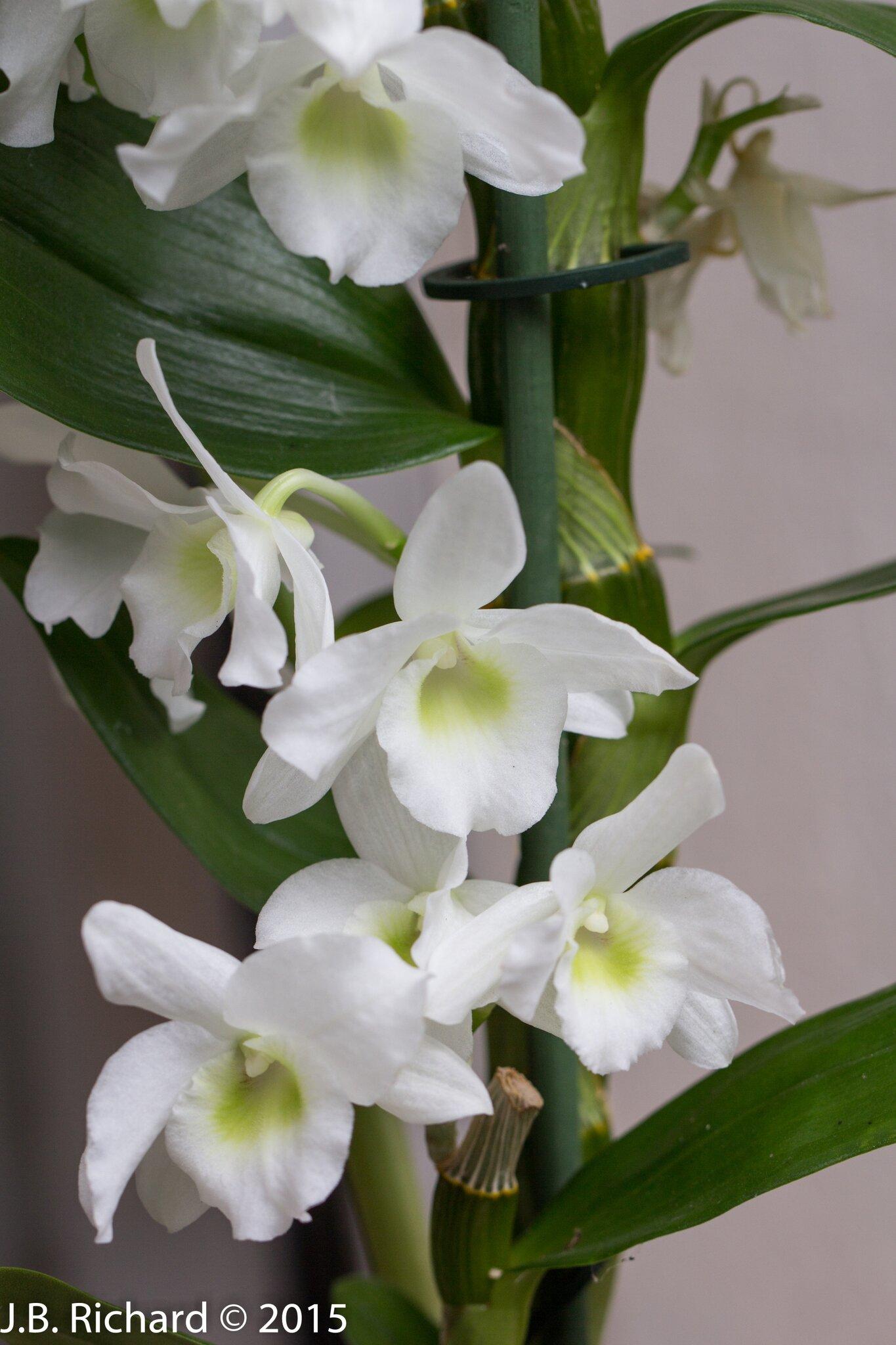 photo bambou orchidee coin de cv