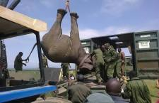 Nine Elephants Moved from Ol Pejeta to Meru National Park